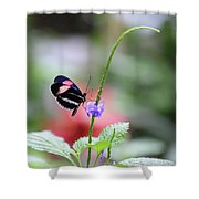 Pink And Blue Butterfly Shower Curtain