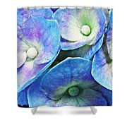 Pink And Blue Hydrangea 5 Shower Curtain