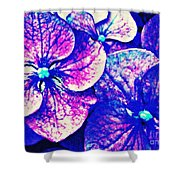 Pink And Blue Hydrangea Shower Curtain