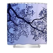 Pink And Blues Shower Curtain