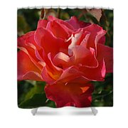 Pink And Gold Rose Shower Curtain