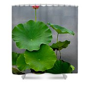 Pink And Green On Grey Shower Curtain