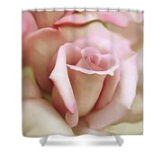 Pink And Ivory Rose Portrait Shower Curtain
