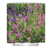 Pink And Lavender Shower Curtain