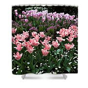 Pink And Mauve Tulips Shower Curtain
