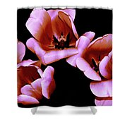 Pink And Orange Tulips Shower Curtain