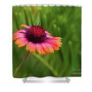 Pink And Orange Wild Daisy Shower Curtain