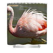 Pink And Proud Shower Curtain