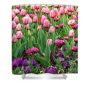 Pink And Purple Tulips At The Spring Floriade Festival Shower Curtain