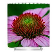 Pink And Red Shower Curtain