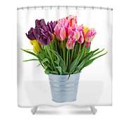 Pink And Violet  Tulips Shower Curtain