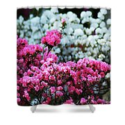 Pink And White Azelas Shower Curtain