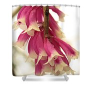 Pink And White Bells Shower Curtain