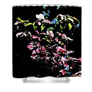 Pink And White Blossoms Shower Curtain