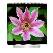 Pink And White Clematis Shower Curtain