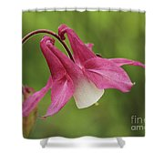 Pink And White Columbine Shower Curtain