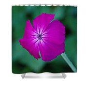 Pink And White Flower Shower Curtain
