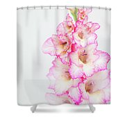 Pink And White Gladiola Shower Curtain