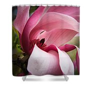 Pink And White Magnolia Shower Curtain