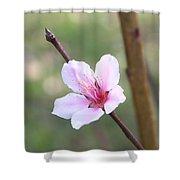 Pink And White Nectarine Blossom Shower Curtain
