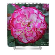 Pink And White Rose Square Shower Curtain