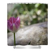 Pink And White Tulip 02 Shower Curtain