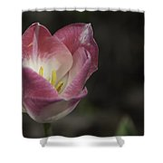 Pink And White Tulip 04 Shower Curtain