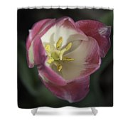 Pink And White Tulip Center Squared 2 Shower Curtain