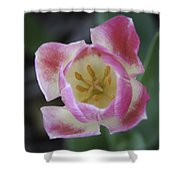 Pink And White Tulip Center Squared Shower Curtain