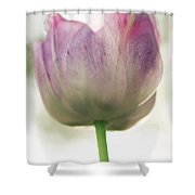 Pink And White Tulip Shower Curtain