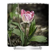 Pink And White Tulip Squared Shower Curtain