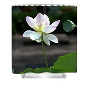 Pink And White Water Lily With Green Pod Shower Curtain