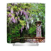 Pink And White Wisterias Shower Curtain