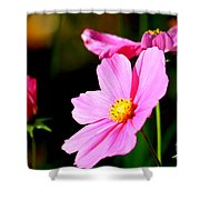 Pink And Yellow Cosmo Shower Curtain