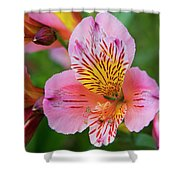 Pink And Yellow Flora Shower Curtain
