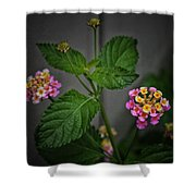 Pink And Yellow Flowers Shower Curtain