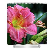 Pink And Yellow Lily After Rain Shower Curtain
