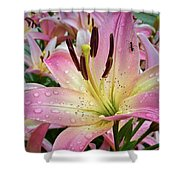 Pink And Yellow Mountain Lily Shower Curtain