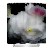 Pink And Yellow On White 5 Shower Curtain