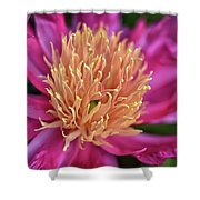 Pink And Yellow Peony Shower Curtain