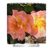 Pink And Yellow Roses Shower Curtain