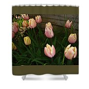 Pink And Yellow Tulips Shower Curtain
