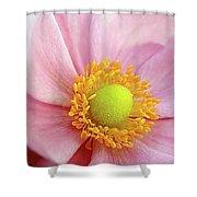 Pink Anemone Shower Curtain
