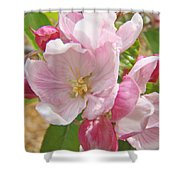 Pink Apple Blossoms Art Prints Spring Trees Baslee Troutman Shower Curtain