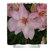 Pink Asiatic Lilies 1 Shower Curtain