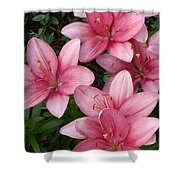Pink Asiatic Lilies 2 Shower Curtain