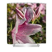Pink Azalea Beauty Shower Curtain
