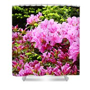 Pink Azalea Flowers Landscape 11 Art Prints Canvas Artwork Framed Art Cards Shower Curtain