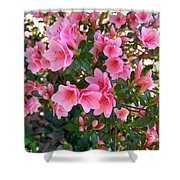 Pink Azaleas IIi Shower Curtain