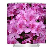 Pink Azaleas Summer Garden 6 Azalea Flowers Giclee Art Prints Baslee Troutman Shower Curtain